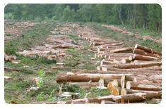An image of a deforested area.